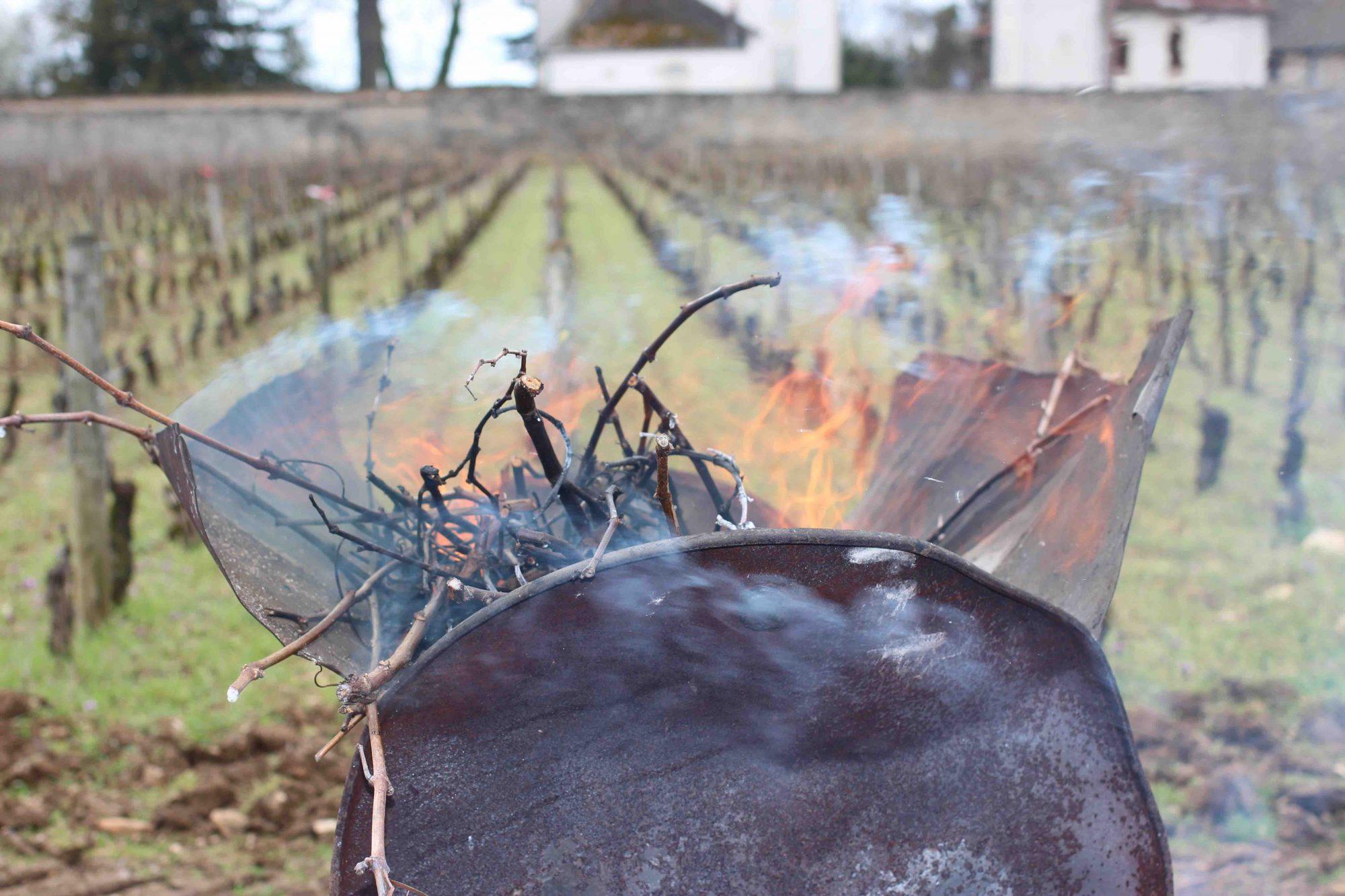 Cane Burning