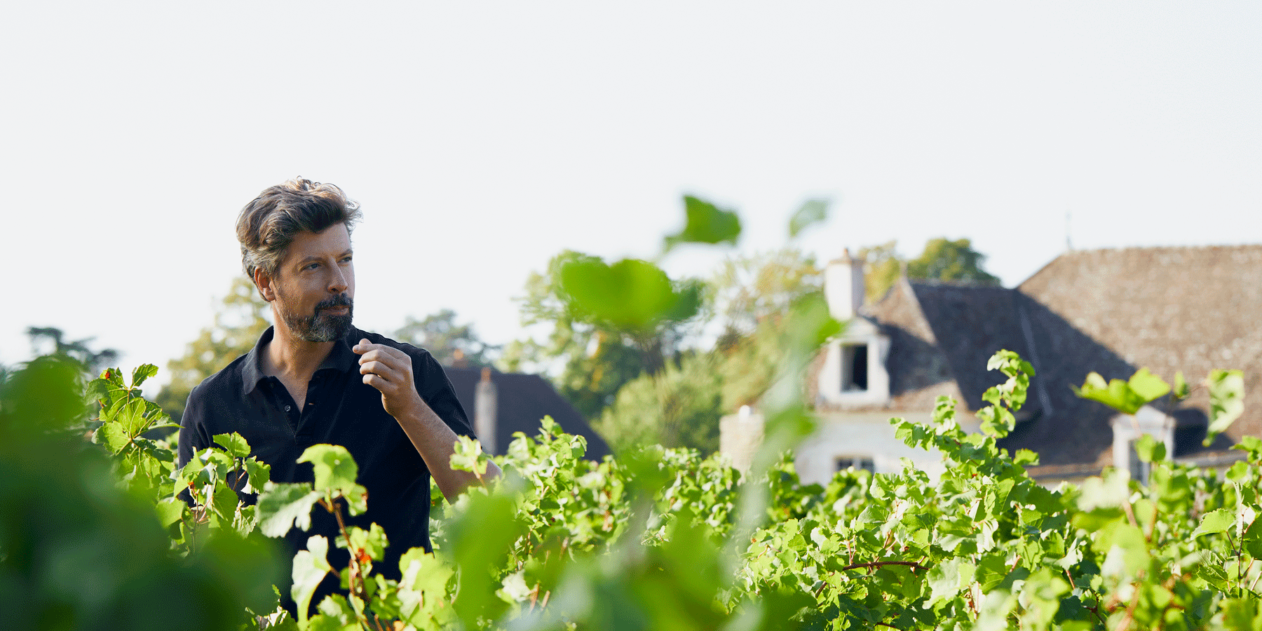 harvest.experience.burgundy