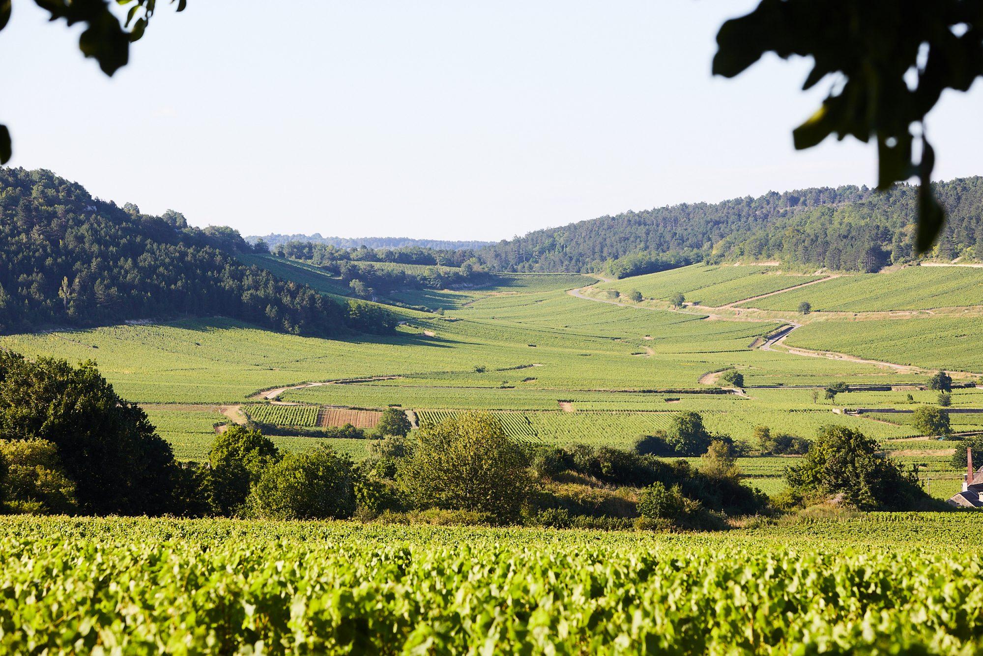 Chateau_de_Pommard_Landscapes_044