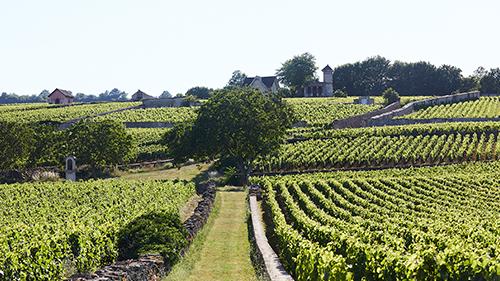 Burgundy wine experience